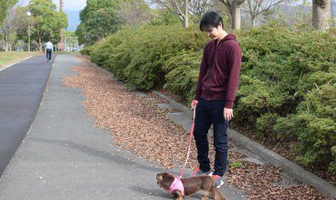 散歩 犬 ちょこちゃん