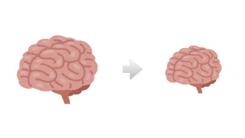 脳みそが小さくなる
