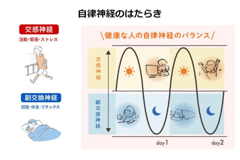 交感神経と副交感神経の図形